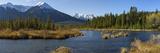 Rocky Mt Meadow