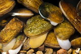 Endangered Mussels