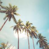 Coconut Palm Tree on Tropical Beach in Summer - Vintage Colour Effect Reproduction d'art par Jakkapan