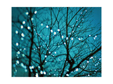 Tree at Night with Lights Reproduction d'art par Myan Soffia