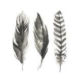 Watercolor Feathers I Tableau sur toile par Grace Popp