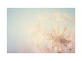Dandelion Dreams Reproduction d'art par Laura Evans
