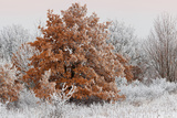 Austria  Lower Austria  Mšdling  Eichkogel  Hoarfrost  Oaks  Frost