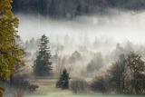 Germany  Bavaria  Penzberg  Moor  Conifers