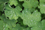 Women's Casing  Leaves  Drops of Water