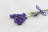 Lavender  Blossoms  Smell  Bunch
