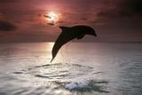 Sea, Silhouette, Ordinary Dolphin, Delphinus Delphis, Jump Papier Photo par Frank Lukasseck