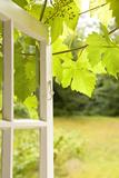 Window  Open  Garden
