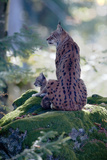 Forest  Eurasian Lynx  Lynx Lynx  Mother Animal  Watchfulness  Young Animal  Sitting  Back View