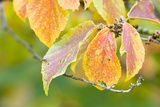 Broad-Leaved Tree  Branch  Leaves  Autumn  Close-Up