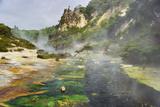 Hot Springs  Waimangu Volcanic Valley  Rotorua  Bay of Plenty  North Island  New Zealand