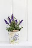Lavender  Blossoms  Smell  Rivererpot