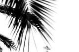 Palm Leaves  Cross  B/W