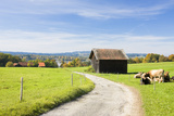Country Lane  Barn  Meadows  Cows  Germany  Bavaria  Staffelsee