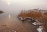 Usedom  Achterwasser  Reed  Frost