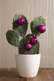 Cactus  Decorates  Christmas Tree Balls