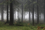 Germany  Thuringia  Rennsteig  Forest  Trees  Fog