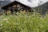 Flower Meadow  Farmhouse