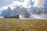 Italy  South Tyrol  the Dolomites  Geislerspitzen