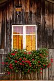Geranium in Front of Window