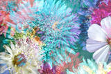 Blossoms of Dahlia and Daisy Star  Poetic Photographic Layer Work
