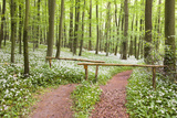 Beech Forest  Forest Path  Forest Floor  Wild Garlic  Allium Ursinum