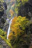 Austria  Pongau  Liechtenstein Gorge  Waterfall  Autumn