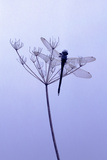 Dragonfly  Plant  [M