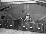 War Dog Elmer  1944