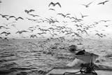Gulls Chasing Behind 1960