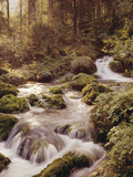 Forest  Brook  Headwaters