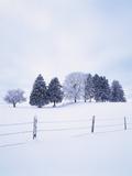 Germany  Bavaria  AllgŠu  Snow Scenery  Trees