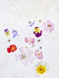 Blossoms  Bright  Different  Still Life