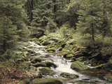 Forest  Brook  Summer