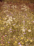 Flower Meadow, Early Summer, Medium Close-Up Papier Photo par Thonig