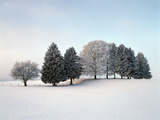 Landscape  Trees  Winter