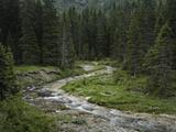 Brook in the Vallesinella Valley  Brenta Adamello Nature Reserve  Trentino