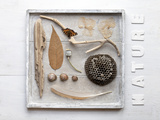 Still Life  Frames  Collection  Natural Materials