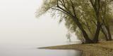 Germany  North Rhine-Westphalia  Cologne  Pastures on the Rhine Shore Beside the Zoo Bridge in Fog