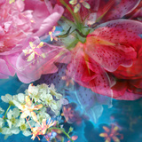 Floral Montage  Photographic Layer Work from Blossoms in Blue Water