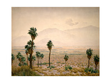 Palm Springs Desert