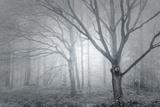 Backwoods Mist