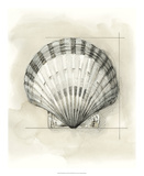 Shell Schematic III Giclée premium par Megan Meagher