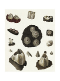 Scientific Illustrations of Coral and Sea Urchins