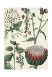 Thistles and Other Flowering Weeds