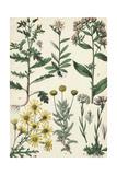 Wild Flowering Plants