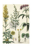 Flowering Plants and Weeds
