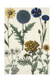 Wildflowers and Floral Weeds