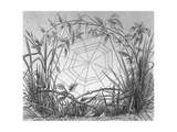 Black and White Stylized Web Between Grassy Stems