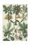 Multiple Botanical Drawings of Leaves and Seeds